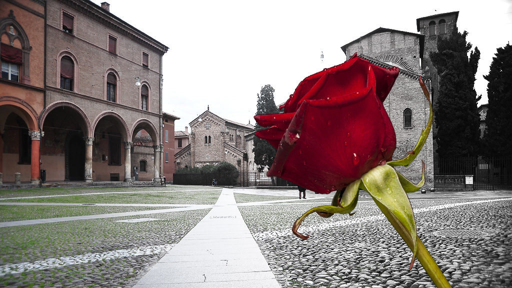A red rose and a Bologna view
