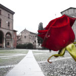 A rose was a start, in Bologna